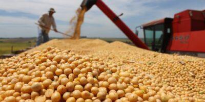 Commodities agrícolas: Uma grande potência econômica no Brasil