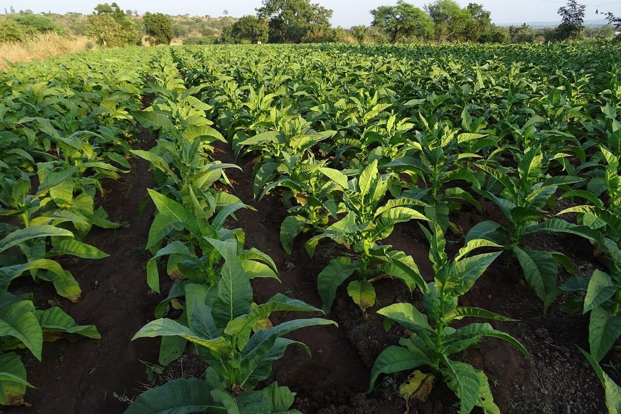 Crédito rural: uma ajuda para o agronegócio