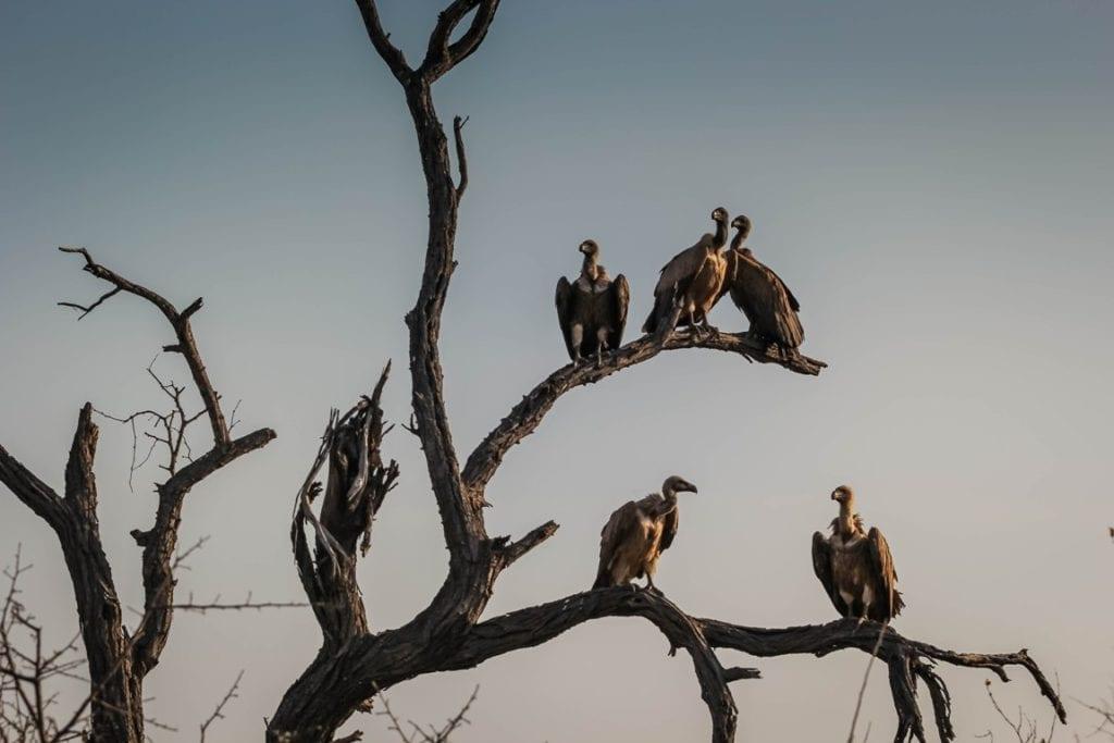 fundos abutres