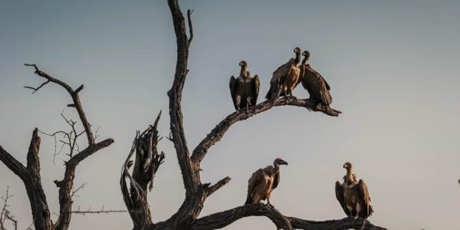 Fundos abutres: conheça a estratégia atípica desses fundos de investimento