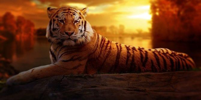 Tigres asiáticos: quais são os países de elevado crescimento econômico?