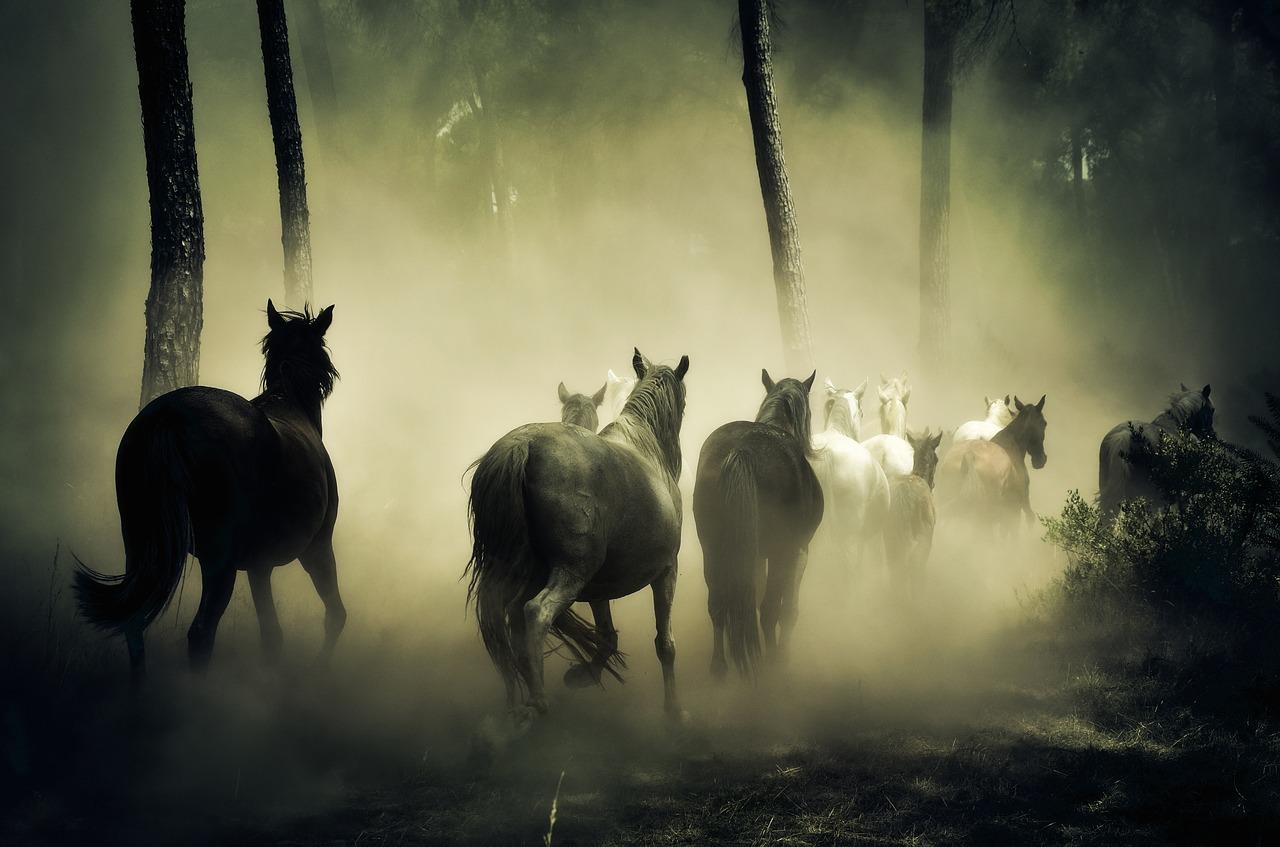 O que é efeito manada e como fugir desse tipo de armadilha?