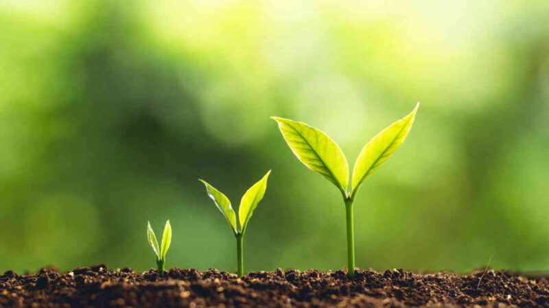 Growth Investing: conheça essa estratégia de investimentos